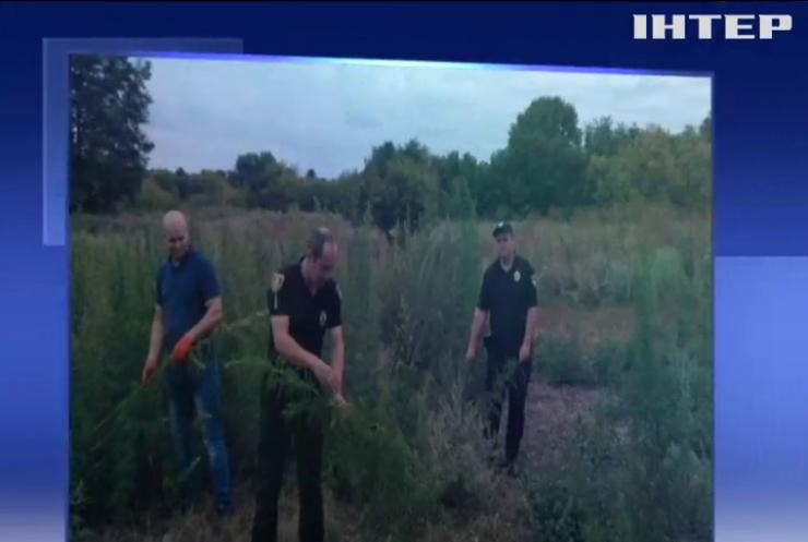 На Кіровоградщині виявили дві плантації конопель