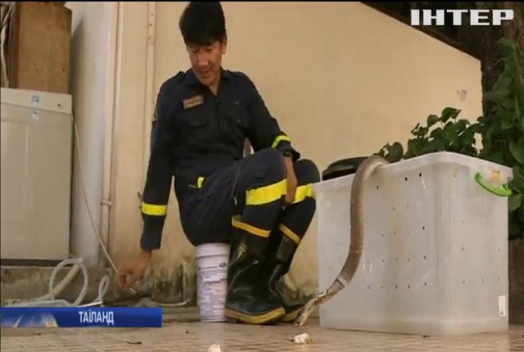 У Бангкоку спокій жителів охороняє приборкувач змій