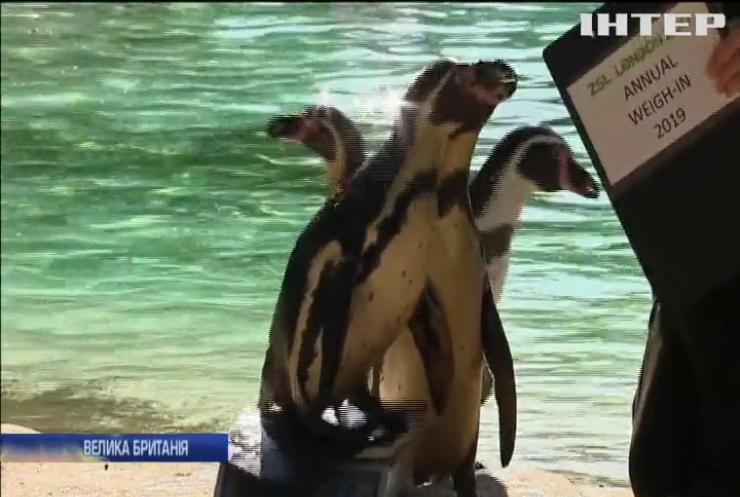 Зважування тварин: у Лондонському зоопарку стартувала найвизначніша подія літа