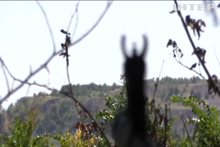 На Донбасі за добу зафіксували сім порушень тиші