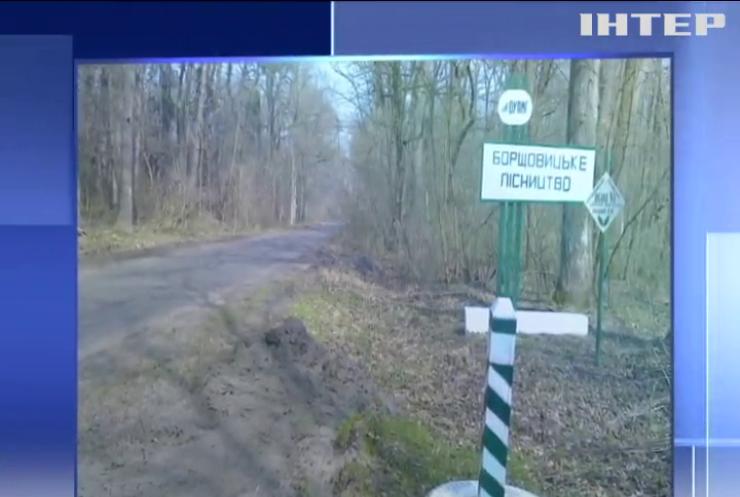 На Львівщині продовжують масово вирубувати дерева
