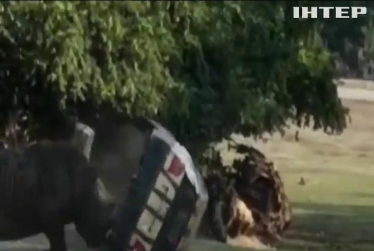 Носоріг пошматував автомобіль доглядача заповідника (відео)