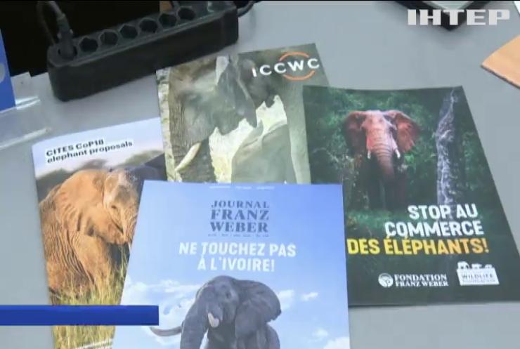 З Африки заборонили вивозити слонів