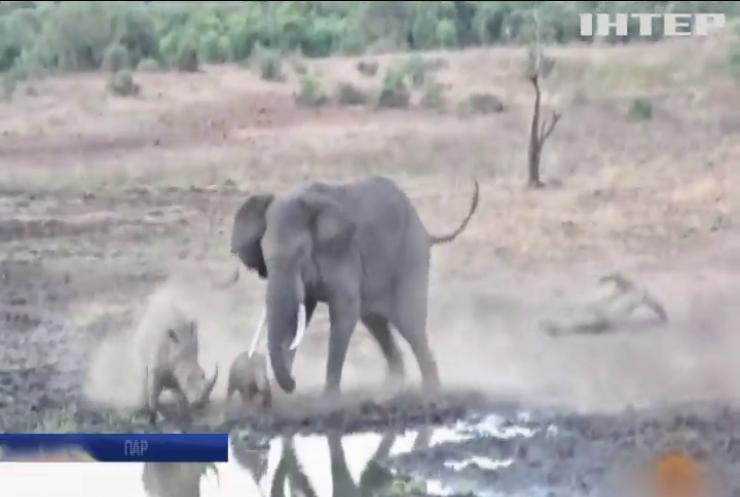 Слон та носоріг не поділили місце на водопої (відео)