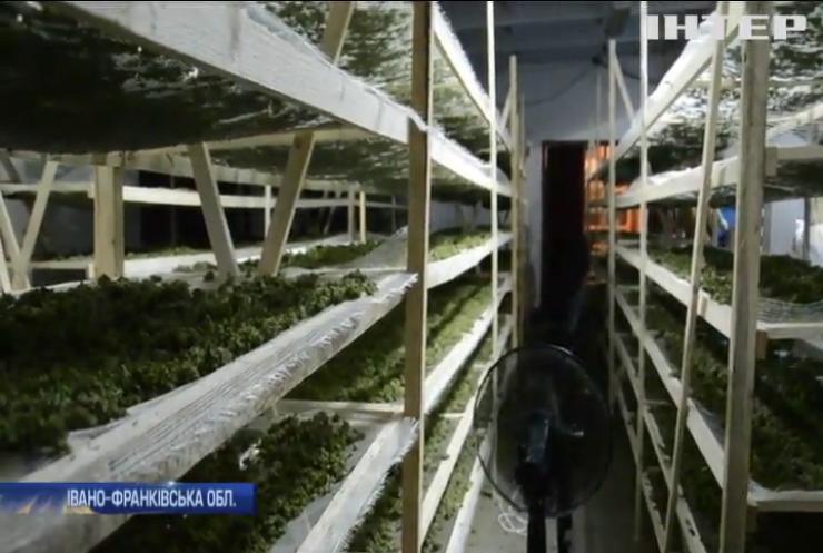 На Прикарпатті поліція виявила найбільшу в Україні плантацію конопель