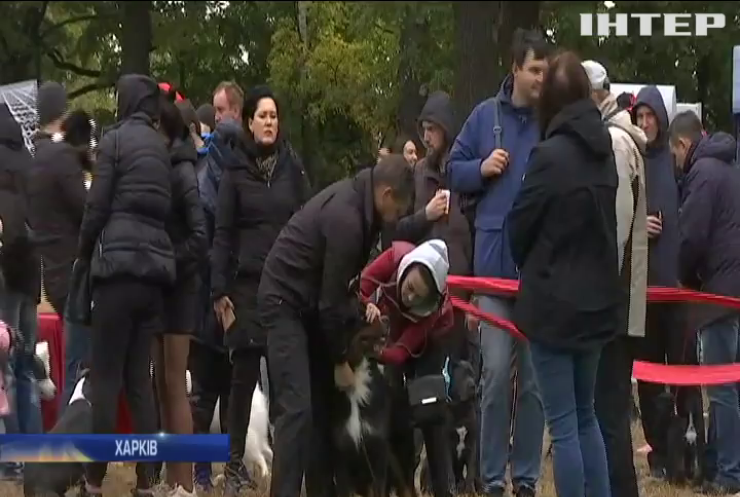 Масштабна виставка собак під Харковом: у Фельдман Екопарку чотирилапі демонстрували свої здібності