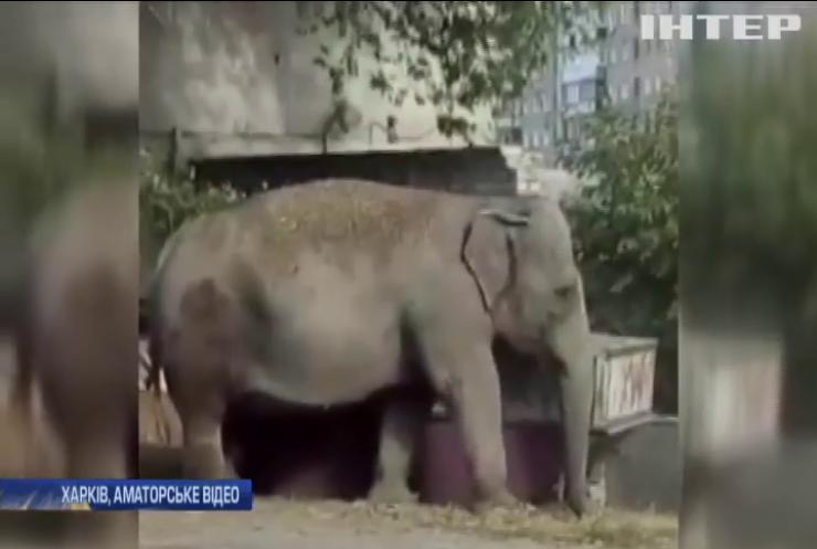 У Харкові дресирувальник випустив слона гуляти на вулицю (відео)