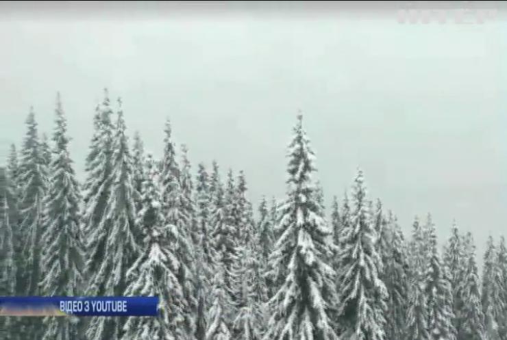 Карпатські ліси накрило снігом