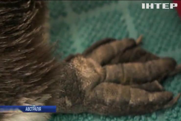 Австралійські зоологи врятували пінгвіна-подорожувальника