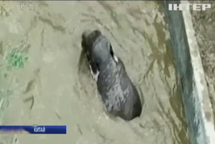 У китайській провінції Юнь-нань врятували слона