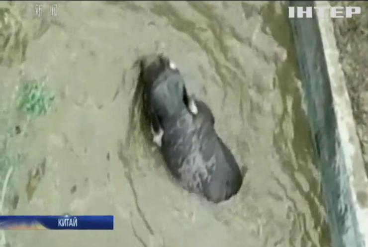 У Китаї врятувала слона із басейну