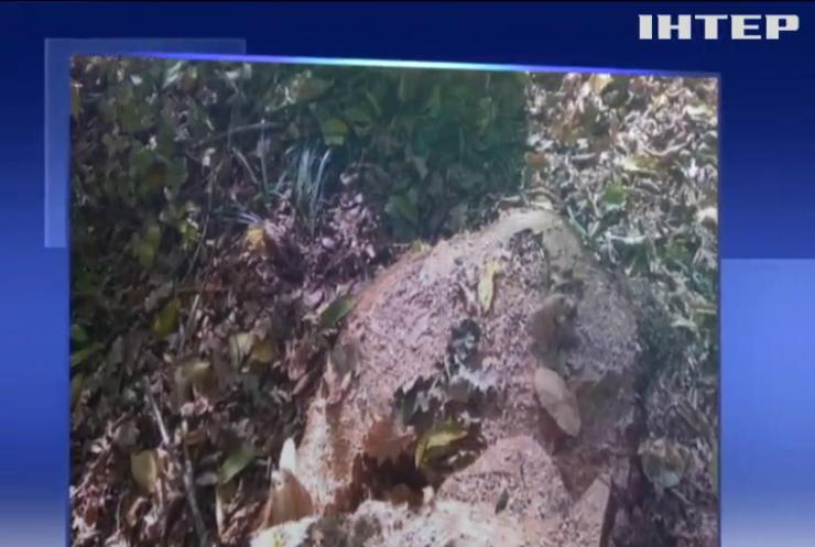 На Буковині затримали організаторів незаконної вирубки лісу