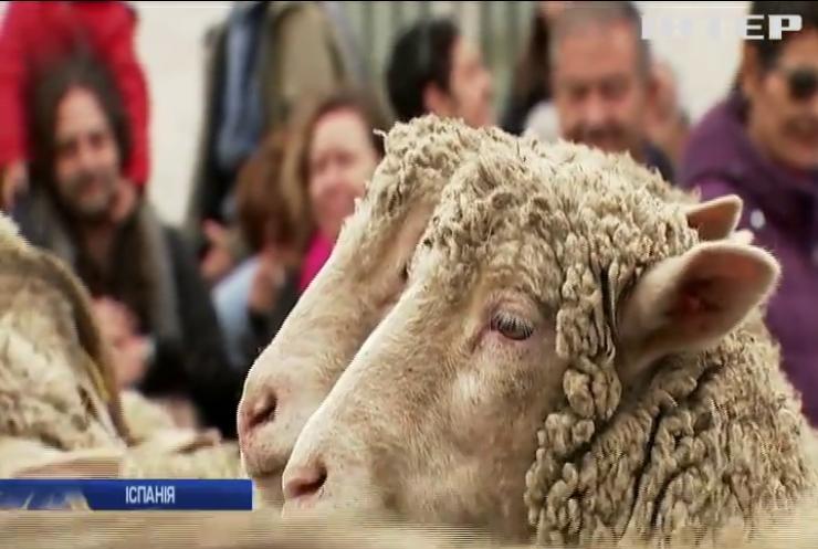 Отара овець пройшлась центром Мадриду