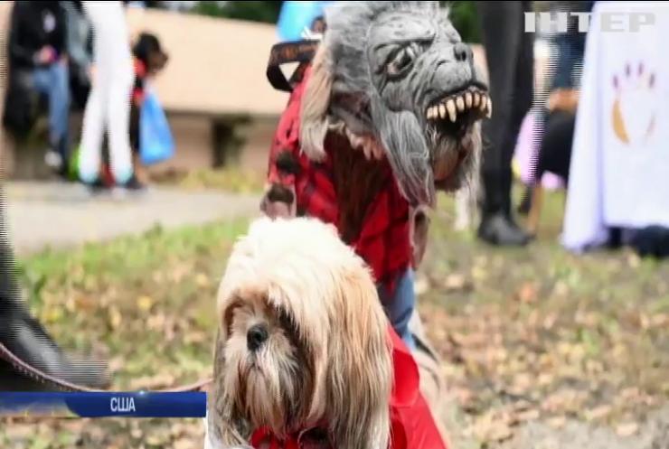 Нью-Йоркські любителі собак готуються до Хелловіну