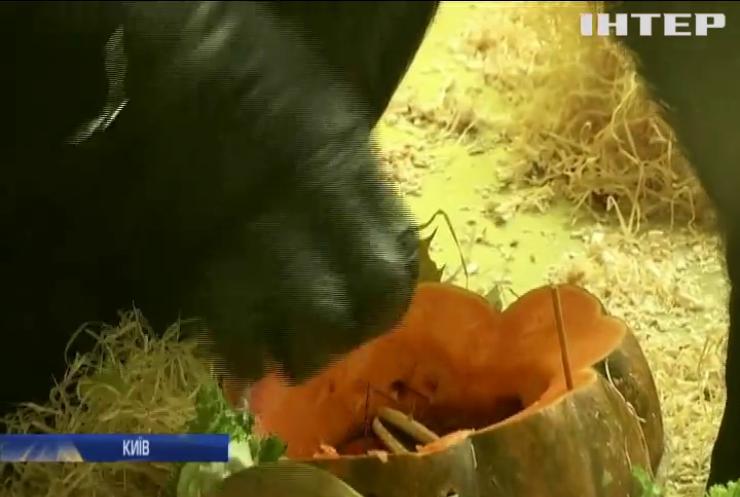 Геловін у зоопарку: звірята ласують гарбузом із сюрпризом