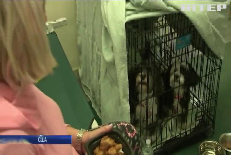Евакуйованих жителів Лос-Анджелеса розселили у притулку для тварин