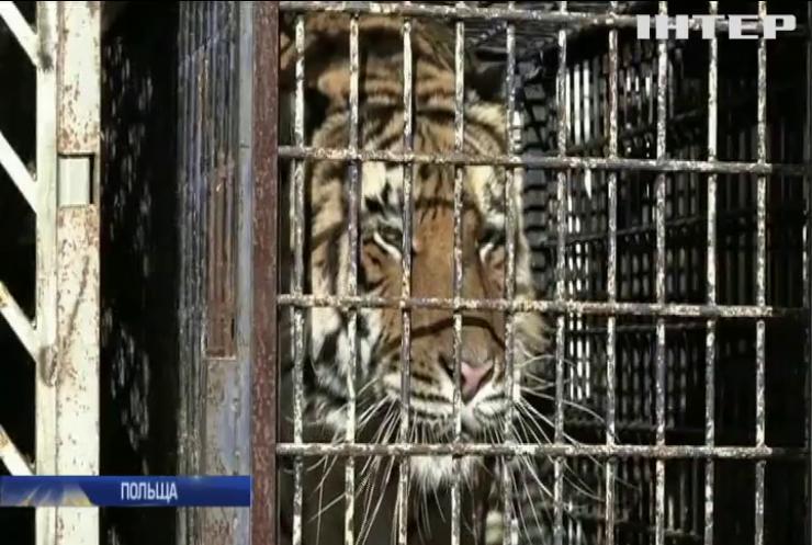 У Польщі врятували від загибелі дев'ять тигрів
