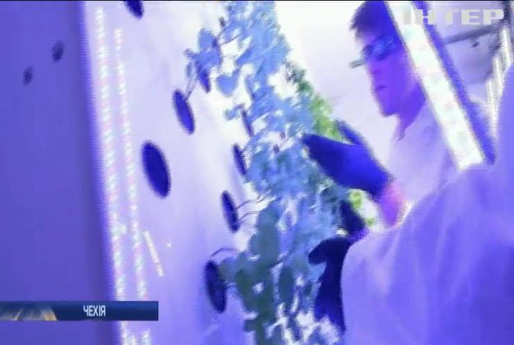 """Експеримент """"Марсонавт"""": чеські агрономи вирощують овочі в екстремальних умовах"""