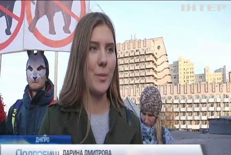 Зоозахисники Дніпра обурені гастролями відомого цирку