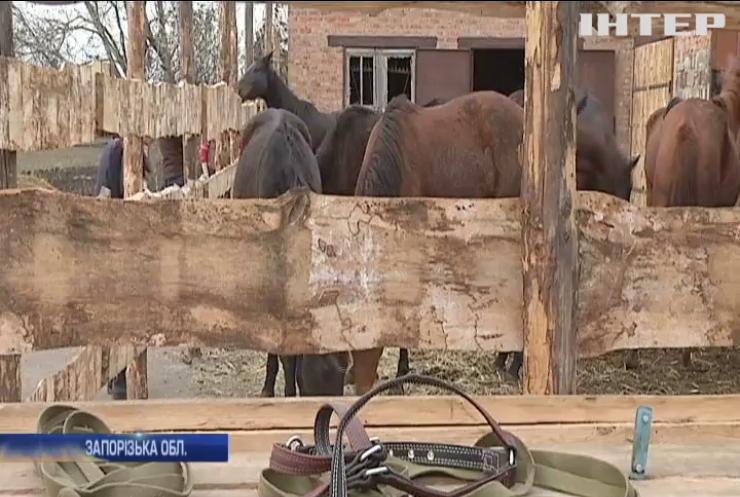 Табун коней з Авдіївки знайшов нове життя у Запоріжжі