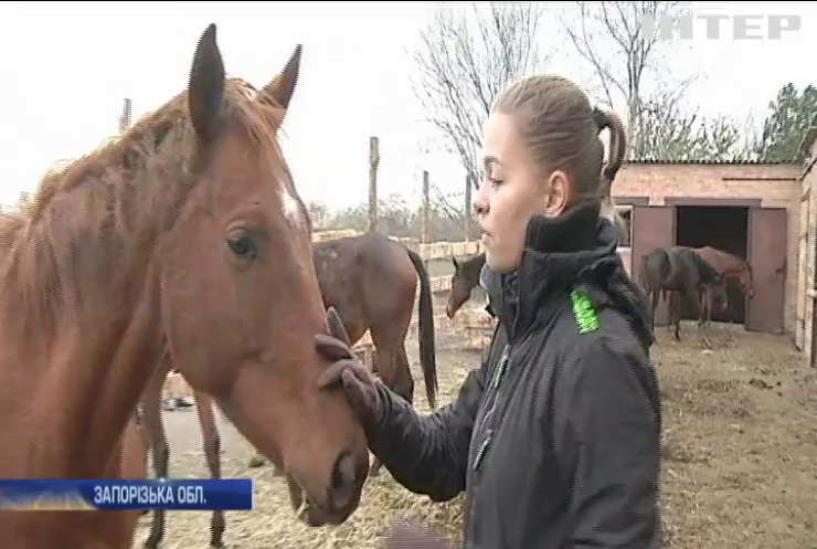 До Запоріжжя з прифронтової Авдіївки евакуювали табун коней