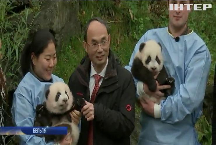 У бельгійському зоопарку дали імені новонародженим пандам