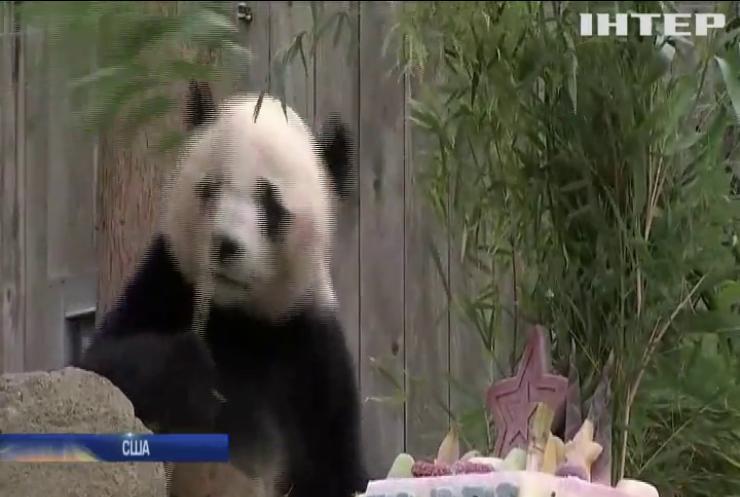 У зоопарку Вашингтона панда Бей Бей набирається вітамінів перед тривалим переїздом