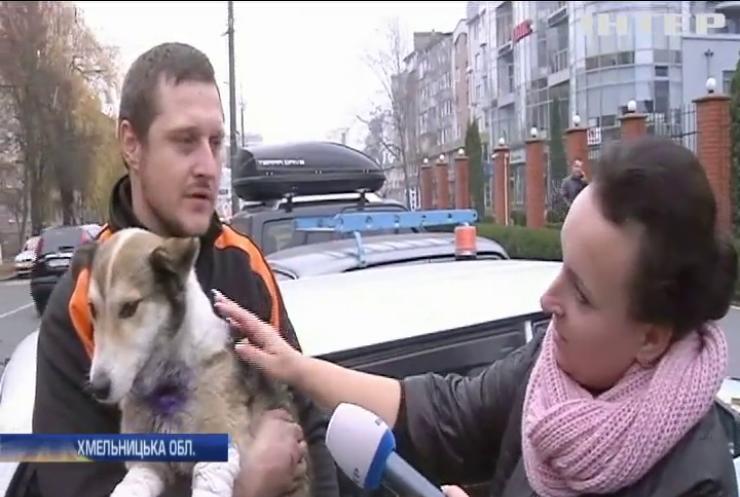 Мешканці Хмельницького вимагають покарати високопосадовця за жорстоке поводження з собакою