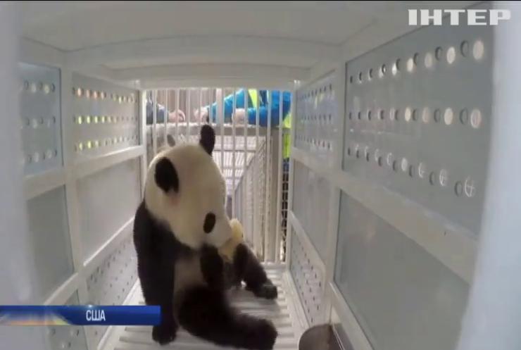 США повернуть Китаю панду для розмноження