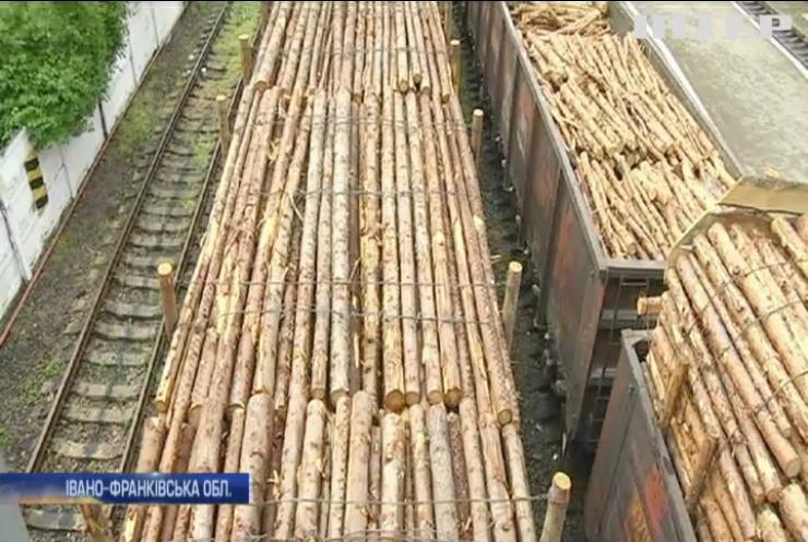 СБУ викрила масштабний розпродаж лісу у Карпатах