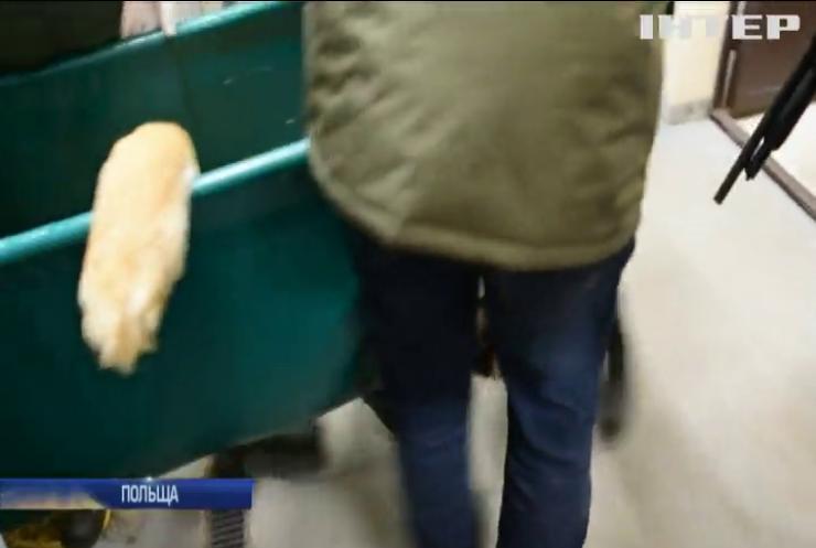 Із Польщі до Іспанії вирушили п'ять урятованих тигрів