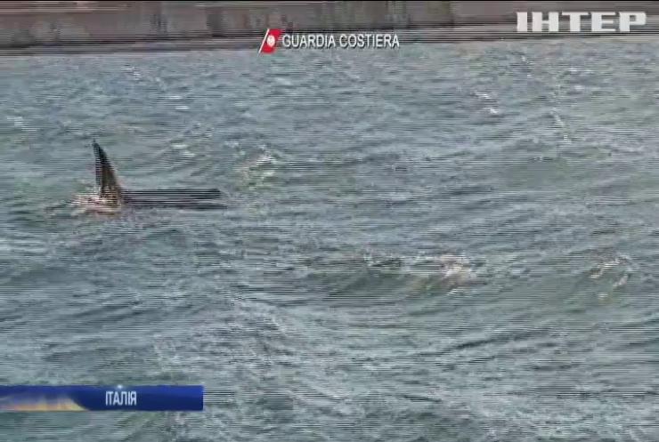 Унікальне видовище: біля узбережжя Італії помітили трьох китів