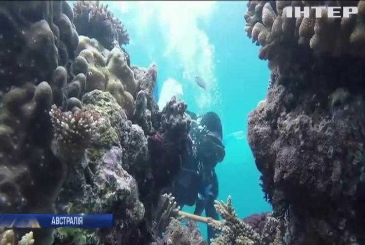 В Австралії рятують Великий бар'єрний риф