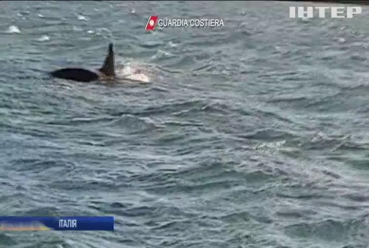 Біля узбережжя Італії помітили трьох китів