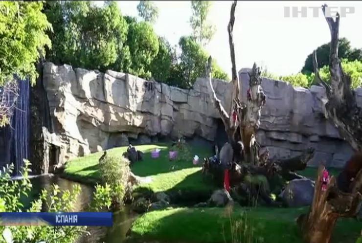 В Іспанії Санта завітав до мешканців зоопарку