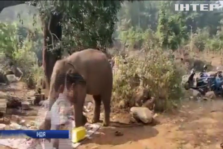 В Індії на пікнік до відпочивальників завітав слон
