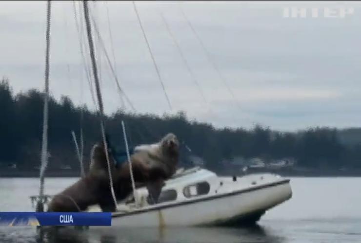 У США морські леви викрали катер