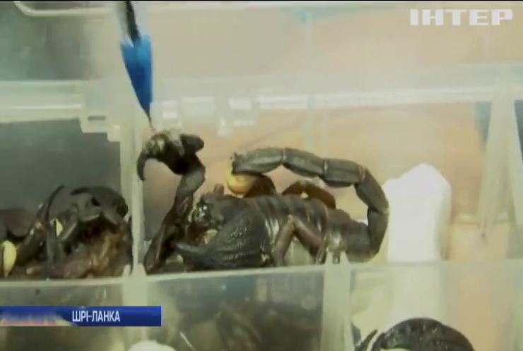 Контрабандист намагався пронести у літак живих скорпіонів