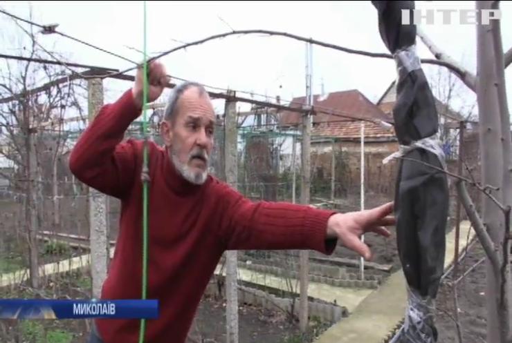 Садівник з Миколаєва зібрав врожай екзотичних фруктів у власному саду