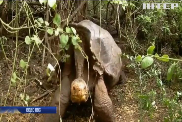 Самець черепахи з легендарним лібідо виходить на пенсію