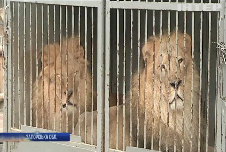 Реабілітаційний центр для диких тварин на Запоріжжі поповнився новими вихованцями