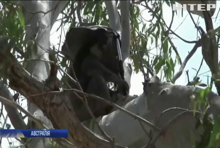 Австралійці беруть відпустки та виходять у ліси для спасіння тварин