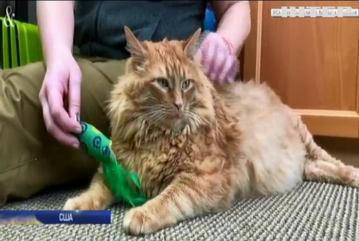 До притулку тварин потрапив кіт-рекордсмен