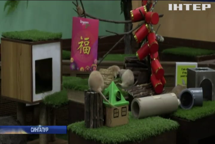 У зоопарку Сингапура вшановують гризунів