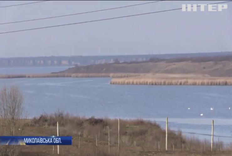 У Миколаївському лимані масово гине риба