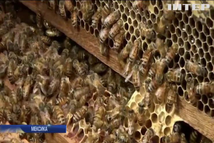 Мексиканські агрономи придумали, як захистити бджіл від пестицидів