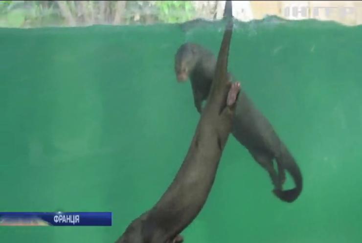 У зоопарку Франції відкрили гігантський тропічний павільйон