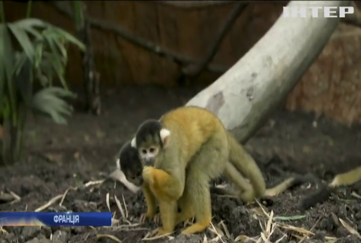 У французькому зоопарку відкрили велетенський павільйон