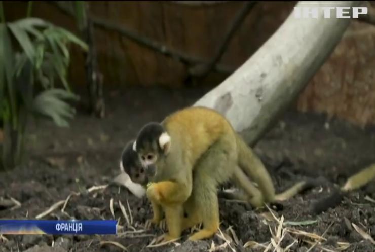 У французькому зоопарку відкрили велетенський купол для тропічних тварин