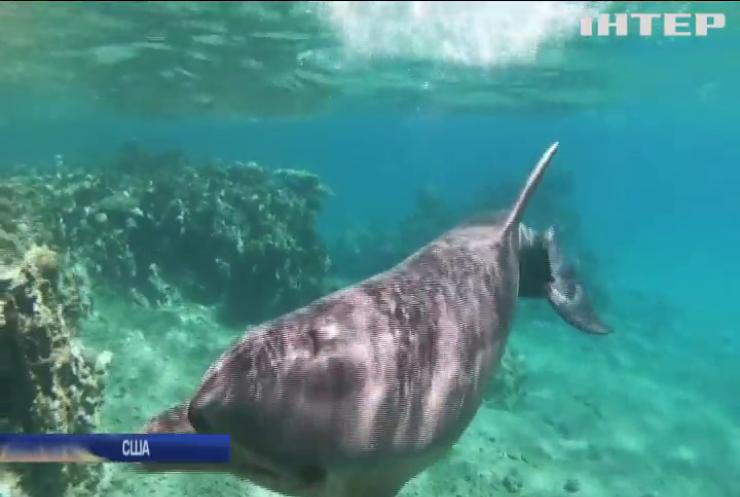 У США пообіцяли $20 тисяч за інформацію про вбивць дельфінів